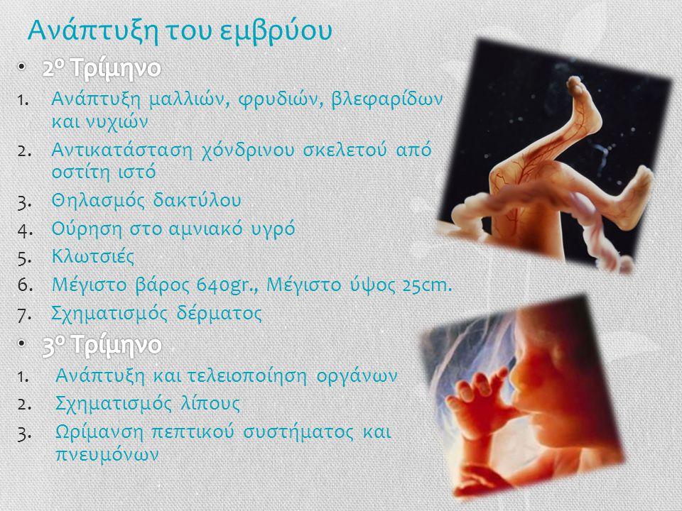 Ανάπτυξη του εμβρύου