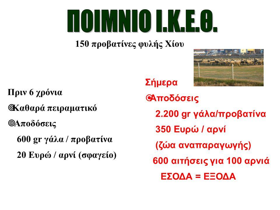 150 προβατίνες φυλής Χίου Πριν 6 χρόνια  Καθαρά πειραματικό  Αποδόσεις 600 gr γάλα / προβατίνα 20 Ευρώ / αρνί (σφαγείο) Σήμερα  Αποδόσεις 2.200 gr
