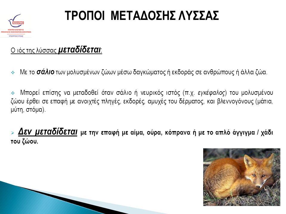 Ο ιός της λύσσας μεταδίδεται :  Mε το σάλιο των μολυσμένων ζώων μέσω δαγκώματος ή εκδοράς σε ανθρώπους ή άλλα ζώα.  Μπορεί επίσης να μεταδοθεί όταν