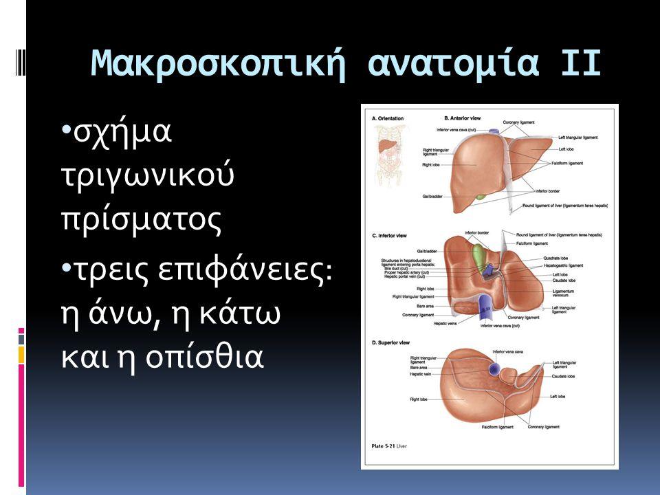 Μακροσκοπική ανατομία ΙΙ • σχήμα τριγωνικού πρίσματος • τρεις επιφάνειες: η άνω, η κάτω και η οπίσθια
