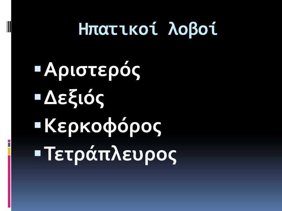Ηπατικοί λοβοί  Αριστερός  Δεξιός  Κερκοφόρος  Τετράπλευρος