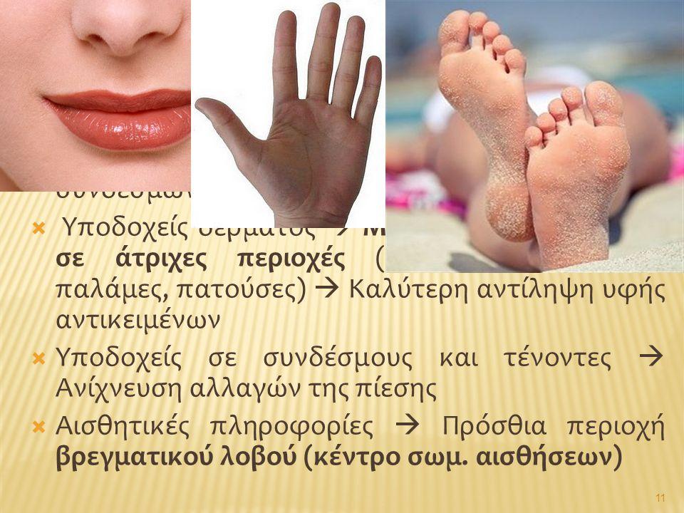  Μηχανοϋποδοχείς (διάφορες ομάδες): ελεύθερες νευρικές απολήξεις ή νευρικά σωμάτια, κατανεμημένα στο δέρμα και σε ιστούς μυών και συνδέσμων  Υποδοχε