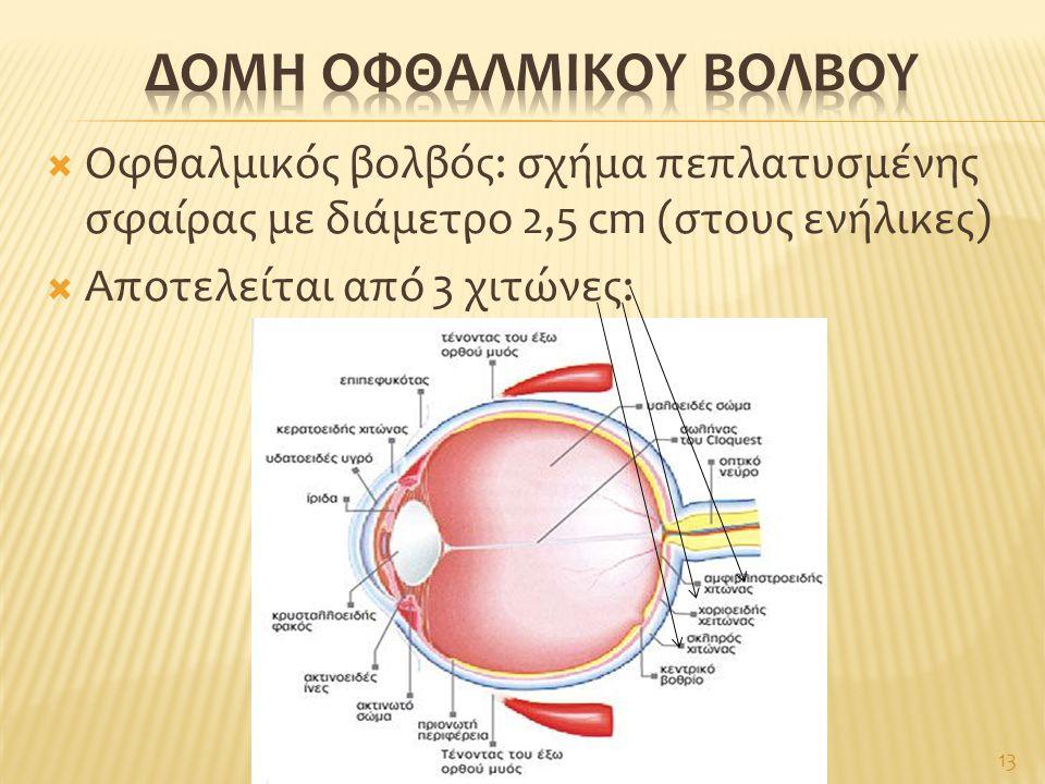  Οφθαλμικός βολβός: σχήμα πεπλατυσμένης σφαίρας με διάμετρο 2,5 cm (στους ενήλικες)  Αποτελείται από 3 χιτώνες: 13