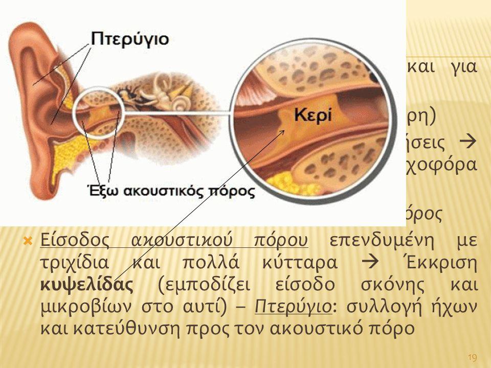  Αυτί: υπεύθυνο για αίσθηση ακοής και για ισορροπία  Εξωτερικό – Μέσο – Εσωτερικό αυτί (3 μέρη)  Υποδεκτικά όργανα για τις δύο αισθήσεις  Εσωτερικ