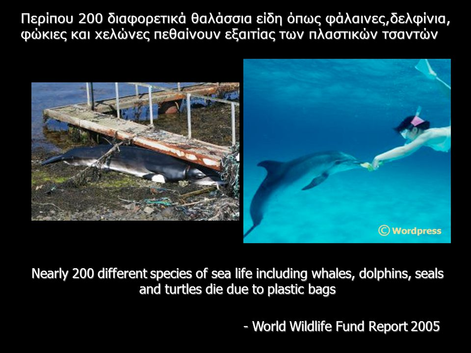 Nearly 200 different species of sea life including whales, dolphins, seals and turtles die due to plastic bags - World Wildlife Fund Report 2005 Περίπ