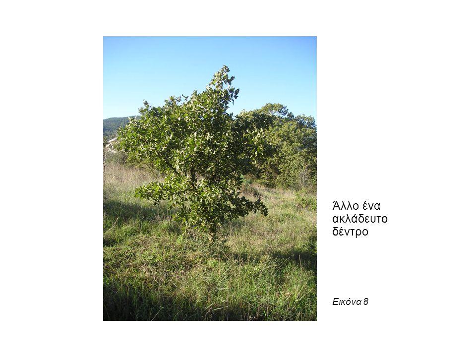 Άλλο ένα ακλάδευτο δέντρο Εικόνα 8