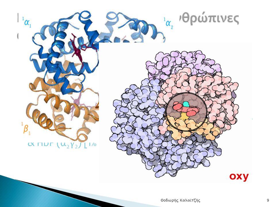  Αιμοσφαιρίνες: Σφαιρικό σχήμα – Τέσσερις πολυπεπ.