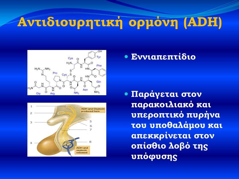 Αντιδιουρητική ορμόνη (ADH)  Εννιαπεπτίδιο  Παράγεται στον παρακοιλιακό και υπεροπτικό πυρήνα του υποθαλάμου και απεκκρίνεται στον οπίσθιο λοβό της υπόφυσης