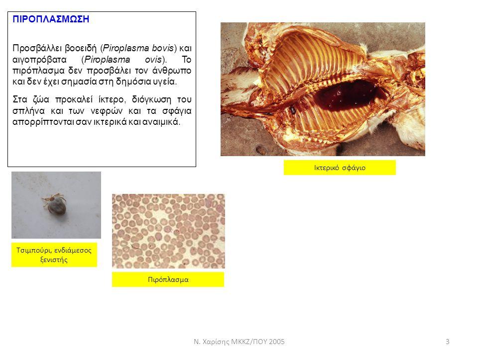 ΠΙΡΟΠΛΑΣΜΩΣΗ Προσβάλλει βοοειδή (Piroplasma bovis) και αιγοπρόβατα (Piroplasma ovis). Το πιρόπλασμα δεν προσβάλει τον άνθρωπο και δεν έχει σημασία στη