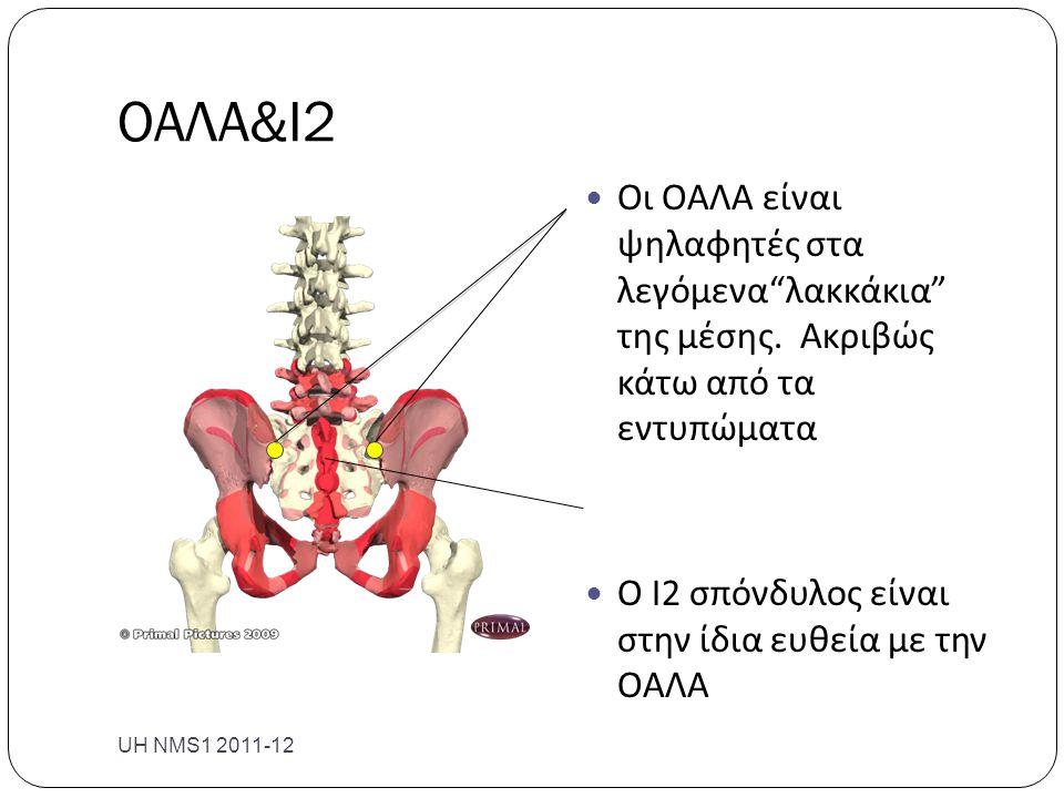 """ΟΑΛΑ&Ι2 UH NMS1 2011-12  Οι ΟΑΛΑ είναι ψηλαφητές στα λεγόμενα""""λακκάκια"""" της μέσης. Ακριβώς κάτω από τα εντυπώματα  Ο Ι2 σπόνδυλος είναι στην ίδια ευ"""
