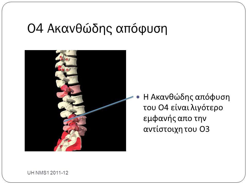 Ο4 Ακανθώδης απόφυση UH NMS1 2011-12  H Ακανθώδης απόφυση του O4 είναι λιγότερο εμφανής απο την αντίστοιχη του Ο3