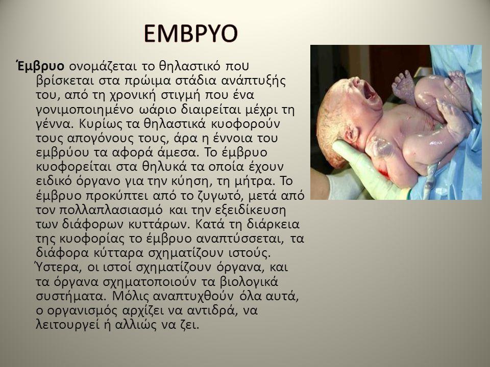 Έμβρυο ονομάζεται το θηλαστικό πο υ βρίσκεται στα πρώιμα στάδια ανάπτυξής του, από τη χρονική στιγμή που ένα γονιμοποιημένο ωάριο διαιρείται μέχρι τη
