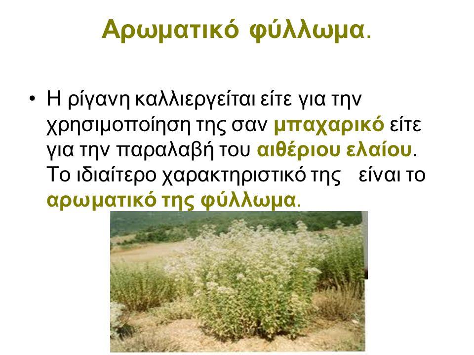 Αρωματικό φύλλωμα. •Η ρίγανη καλλιεργείται είτε για την χρησιμοποίηση της σαν μπαχαρικό είτε για την παραλαβή του αιθέριου ελαίου. Το ιδιαίτερο χαρακτ