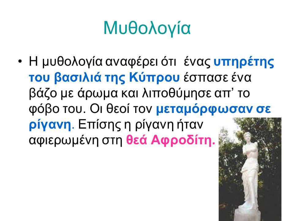 Μυθολογία •Η μυθολογία αναφέρει ότι ένας υπηρέτης του βασιλιά της Κύπρου έσπασε ένα βάζο με άρωμα και λιποθύμησε απ' το φόβο του. Οι θεοί τον μεταμόρφ