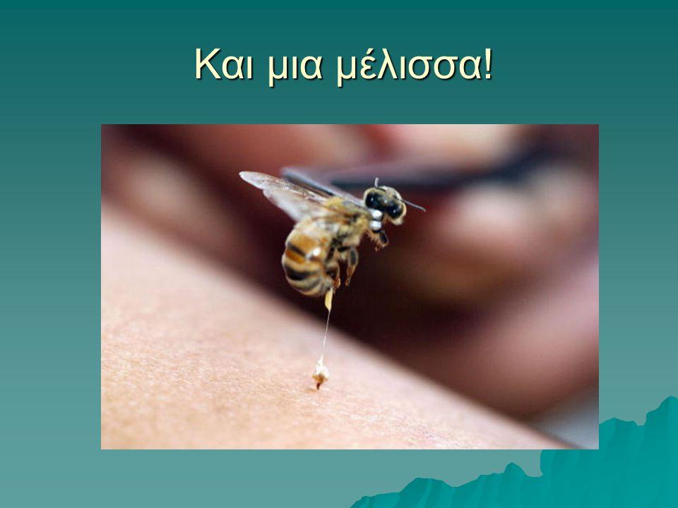 Και μια μέλισσα! Και μια μέλισσα!