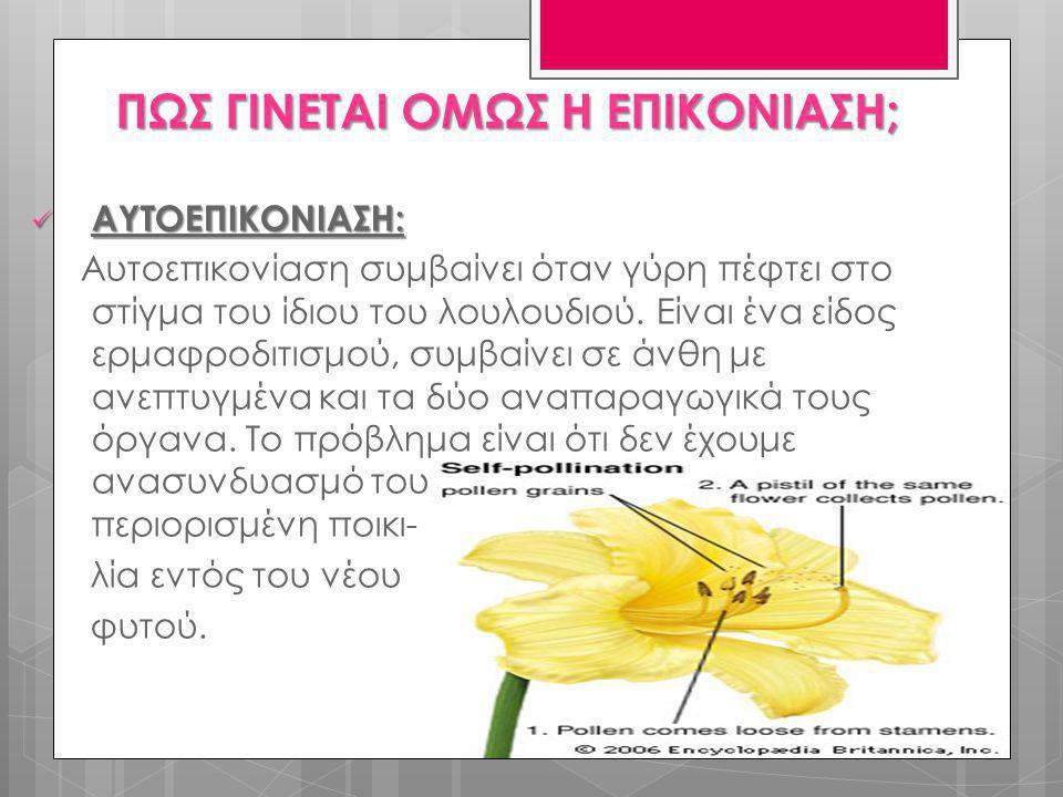  ΑΥΤΟΕΠΙΚΟΝΙΑΣΗ: Αυτοεπικονίαση συμβαίνει όταν γύρη πέφτει στο στίγμα του ίδιου του λουλουδιού. Είναι ένα είδος ερμαφροδιτισμού, συμβαίνει σε άνθη με