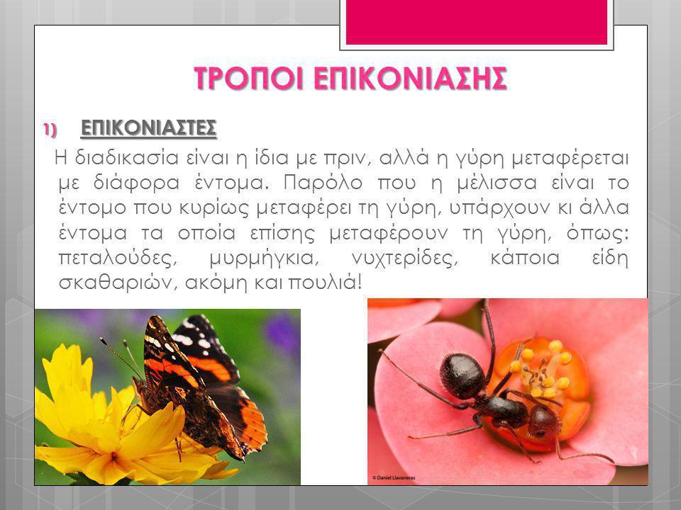 1) ΕΠΙΚΟΝΙΑΣΤΕΣ Η διαδικασία είναι η ίδια με πριν, αλλά η γύρη μεταφέρεται με διάφορα έντομα. Παρόλο που η μέλισσα είναι το έντομο που κυρίως μεταφέρε