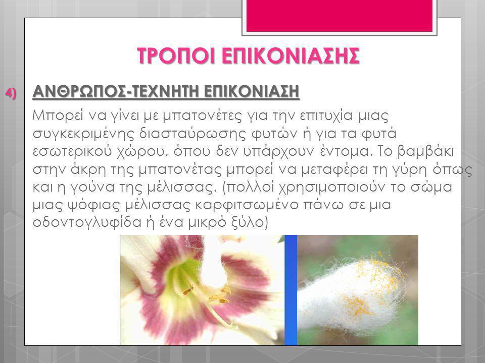 4) ΑΝΘΡΩΠΟΣ-ΤΕΧΝΗΤΗ ΕΠΙΚΟΝΙΑΣΗ Μπορεί να γίνει με μπατονέτες για την επιτυχία μιας συγκεκριμένης διασταύρωσης φυτών ή για τα φυτά εσωτερικού χώρου, όπ
