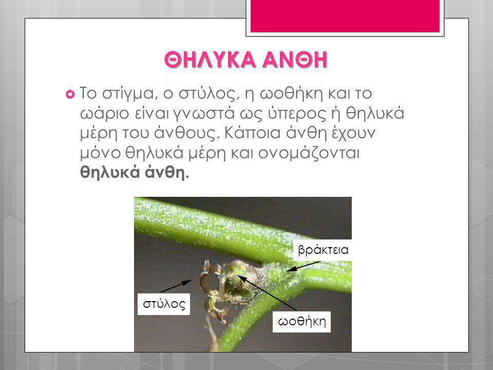  Το στίγμα, ο στύλος, η ωοθήκη και το ωάριο είναι γνωστά ως ύπερος ή θηλυκά μέρη του άνθους. Κάποια άνθη έχουν μόνο θηλυκά μέρη και ονομάζονται θηλυκ