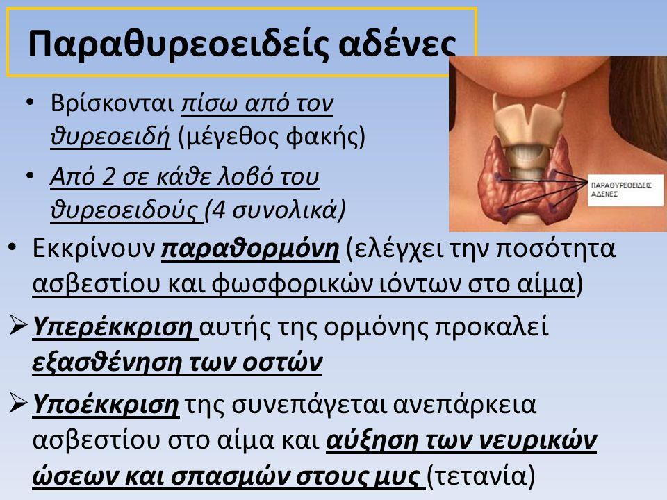 Παραθυρεοειδείς αδένες • Εκκρίνουν παραθορμόνη (ελέγχει την ποσότητα ασβεστίου και φωσφορικών ιόντων στο αίμα)  Υπερέκκριση αυτής της ορμόνης προκαλε