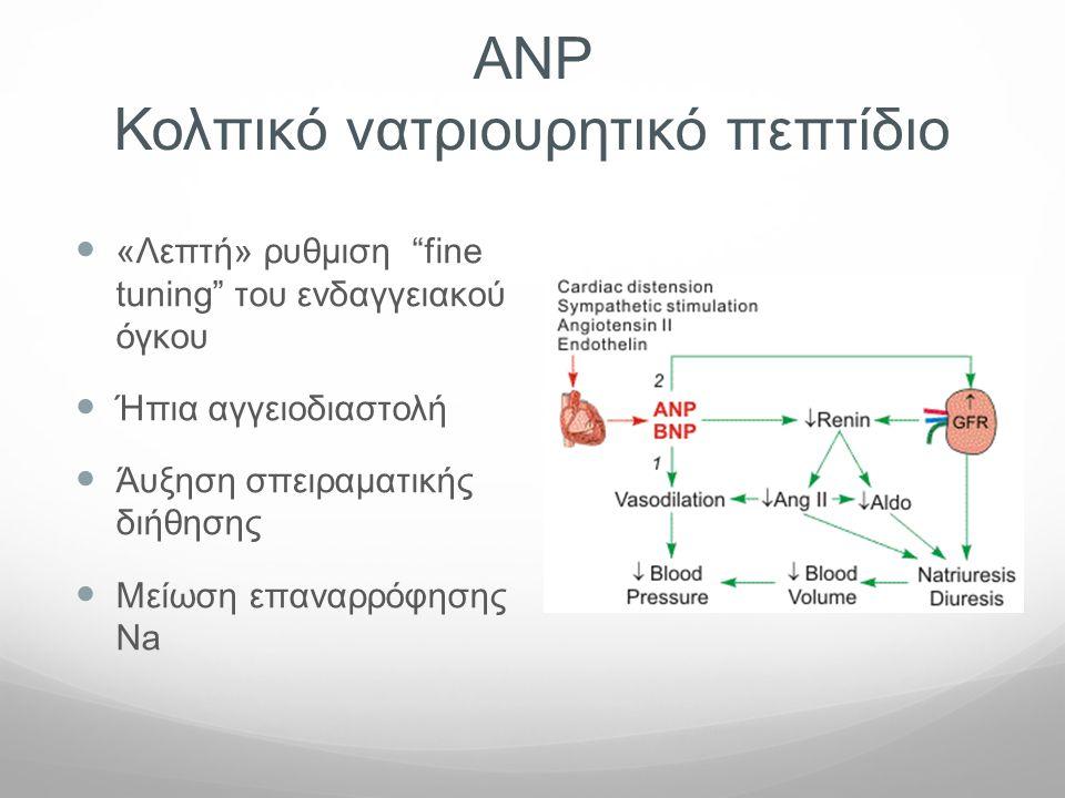 """ΑΝP Κολπικό νατριουρητικό πεπτίδιο  «Λεπτή» ρυθμιση """"fine tuning"""" του ενδαγγειακού όγκου  Ήπια αγγειοδιαστολή  Άυξηση σπειραματικής διήθησης  Μείω"""