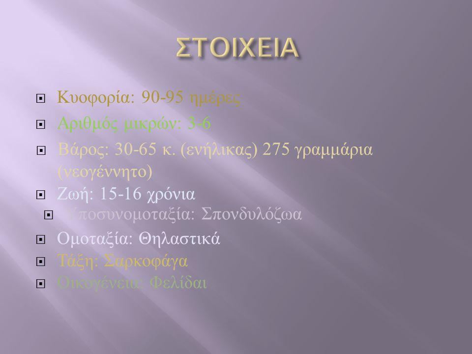  Κυοφορία : 90-95 ημέρες ΑΑριθμός μικρών: 3-6  Βάρος: 30-65 κ. (ενήλικας) 275 γραμμάρια (νεογέννητο)  Ζωή: 15-16 χρόνια  Υποσυνομοταξία: Σπονδυλ