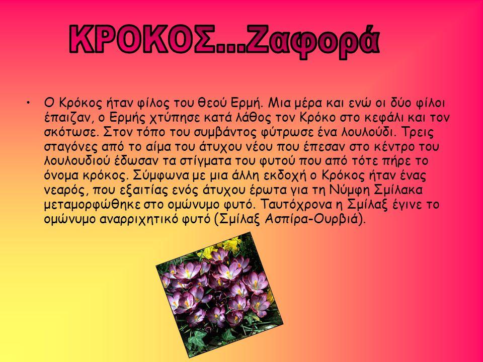 •Ο Κρόκος ήταν φίλος του θεού Ερμή. Μια μέρα και ενώ οι δύο φίλοι έπαιζαν, ο Ερμής χτύπησε κατά λάθος τον Κρόκο στο κεφάλι και τον σκότωσε. Στον τόπο