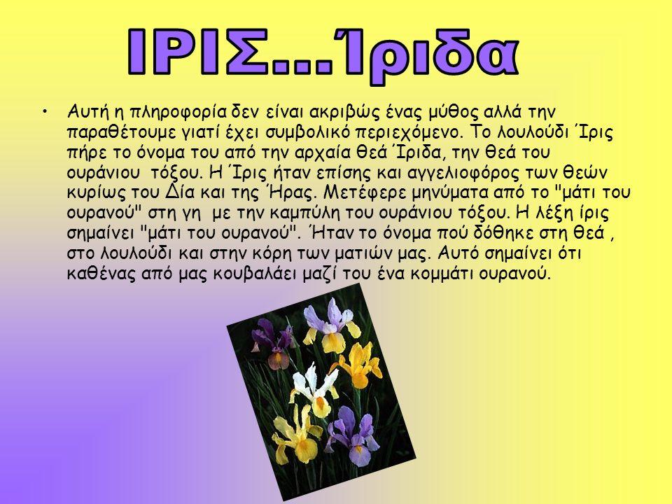 •Αυτή η πληροφορία δεν είναι ακριβώς ένας μύθος αλλά την παραθέτουμε γιατί έχει συμβολικό περιεχόμενο. Το λουλούδι Ίρις πήρε το όνομα του από την αρχα