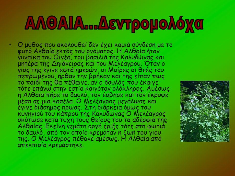 •Ο μύθος που ακολουθεί δεν έχει καμιά σύνδεση με το φυτό Αλθαία εκτός του ονόματος. Η Αλθαία ήταν γυναίκα του Οινέα, του βασιλιά της Καλυδώνας και μητ