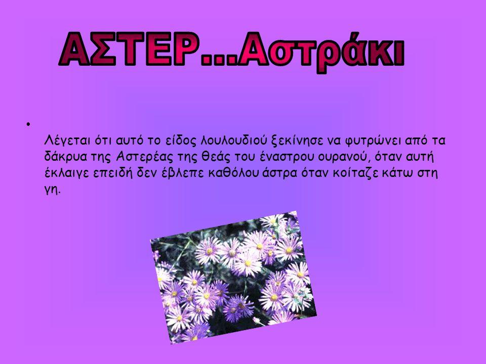 • Λέγεται ότι αυτό το είδος λουλουδιού ξεκίνησε να φυτρώνει από τα δάκρυα της Αστερέας της θεάς του έναστρου ουρανού, όταν αυτή έκλαιγε επειδή δεν έβλ