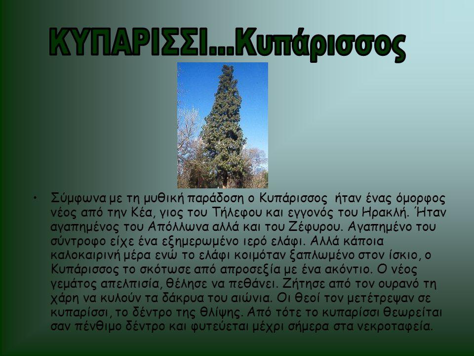 •Σύμφωνα με τη μυθική παράδοση ο Κυπάρισσος ήταν ένας όμορφος νέος από την Κέα, γιος του Τήλεφου και εγγονός του Ηρακλή. Ήταν αγαπημένος του Απόλλωνα