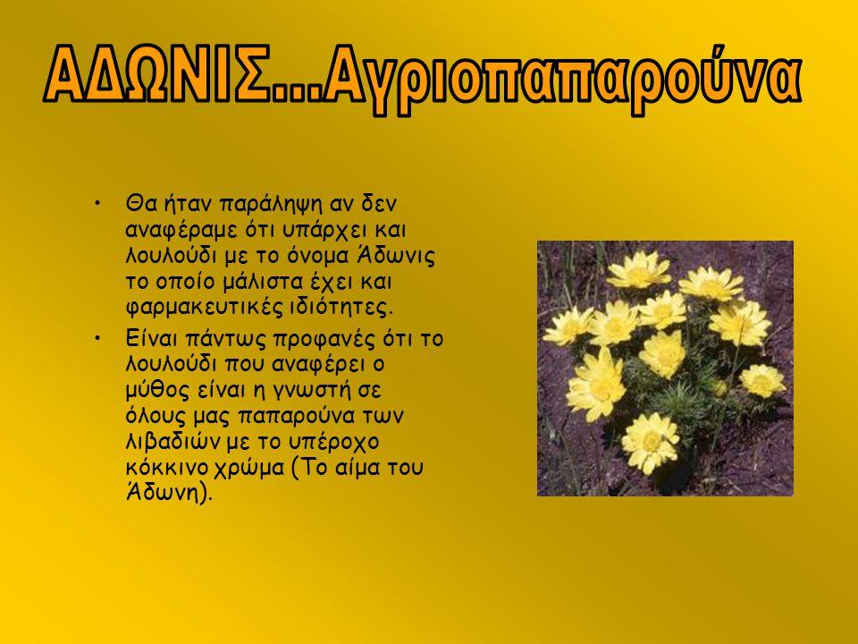 •Θα ήταν παράληψη αν δεν αναφέραμε ότι υπάρχει και λουλούδι με το όνομα Άδωνις το οποίο μάλιστα έχει και φαρμακευτικές ιδιότητες. •Είναι πάντως προφαν