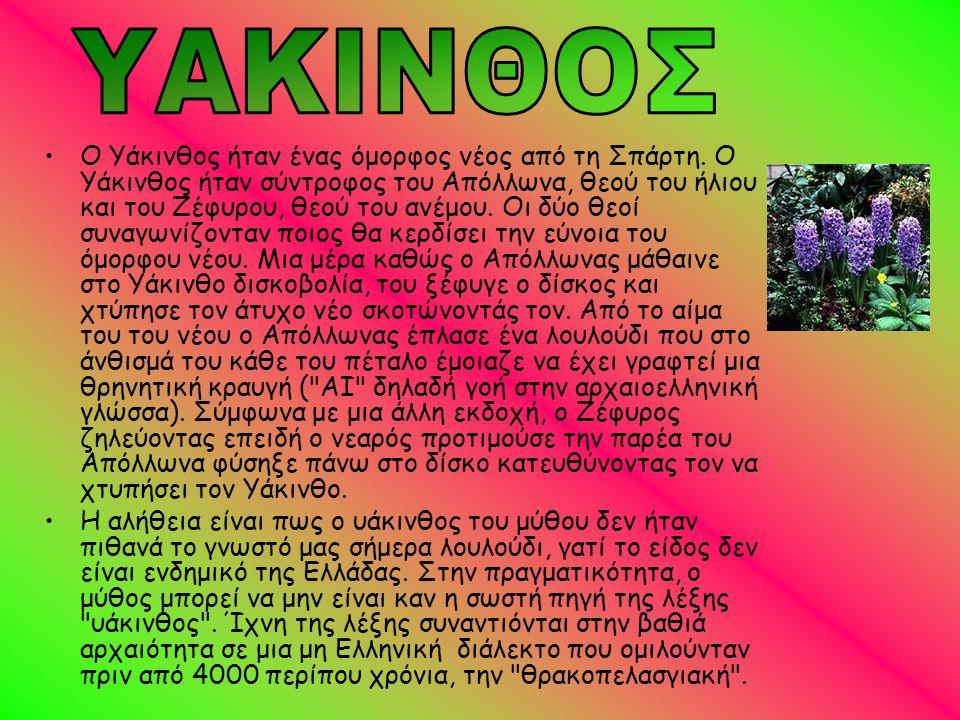 •Ο Υάκινθος ήταν ένας όμορφος νέος από τη Σπάρτη. Ο Υάκινθος ήταν σύντροφος του Απόλλωνα, θεού του ήλιου και του Ζέφυρου, θεού του ανέμου. Οι δύο θεοί