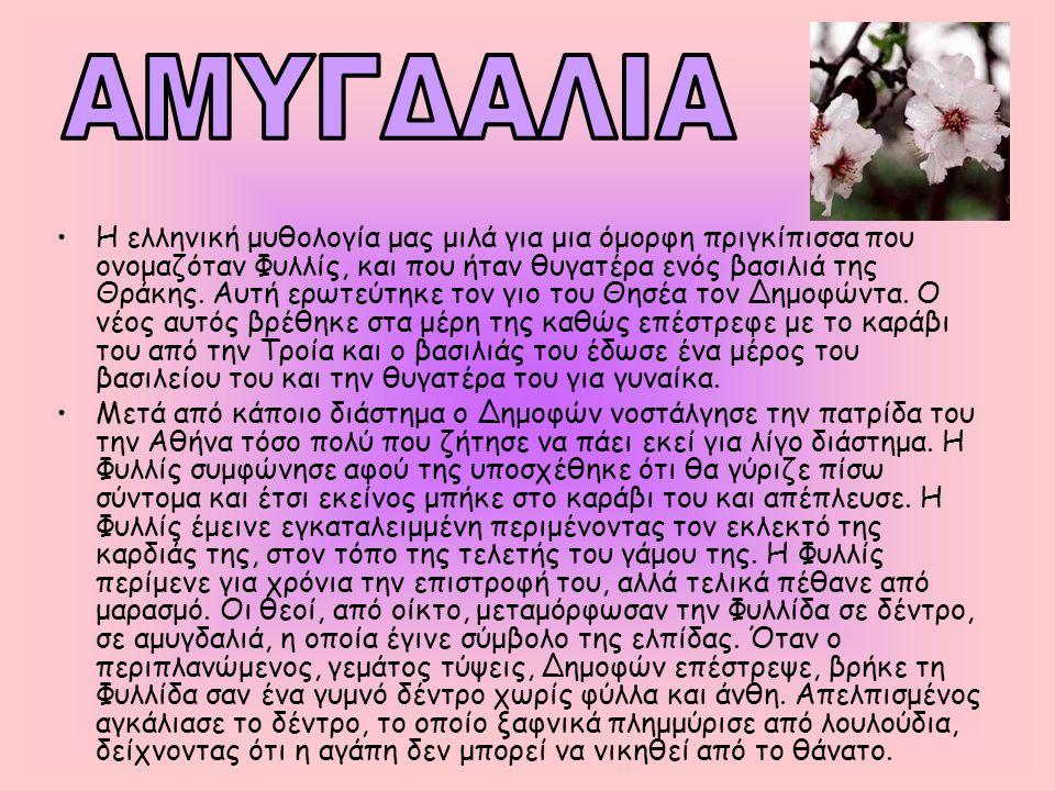 •Η ελληνική μυθολογία μας μιλά για μια όμορφη πριγκίπισσα που ονομαζόταν Φυλλίς, και που ήταν θυγατέρα ενός βασιλιά της Θράκης. Αυτή ερωτεύτηκε τον γι