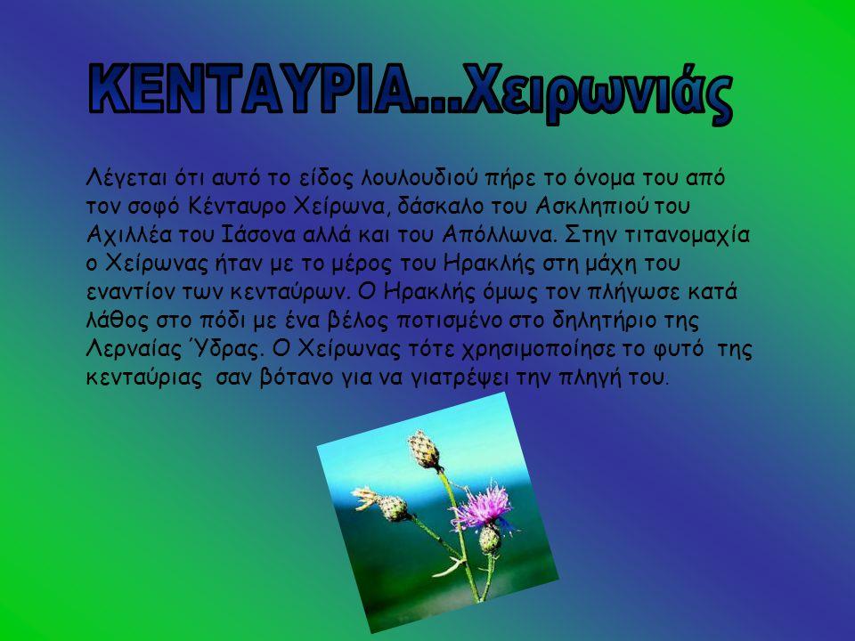•Πιστεύεται ότι η παιώνια πήρε το όνομα της από τον Παίωνα ή Παιάνα που φαίνεται ότι ήταν μια θεότητα της θεραπείας αφού είχε θεραπεύσει τον Άδη και τον Άρη από τραύματα.
