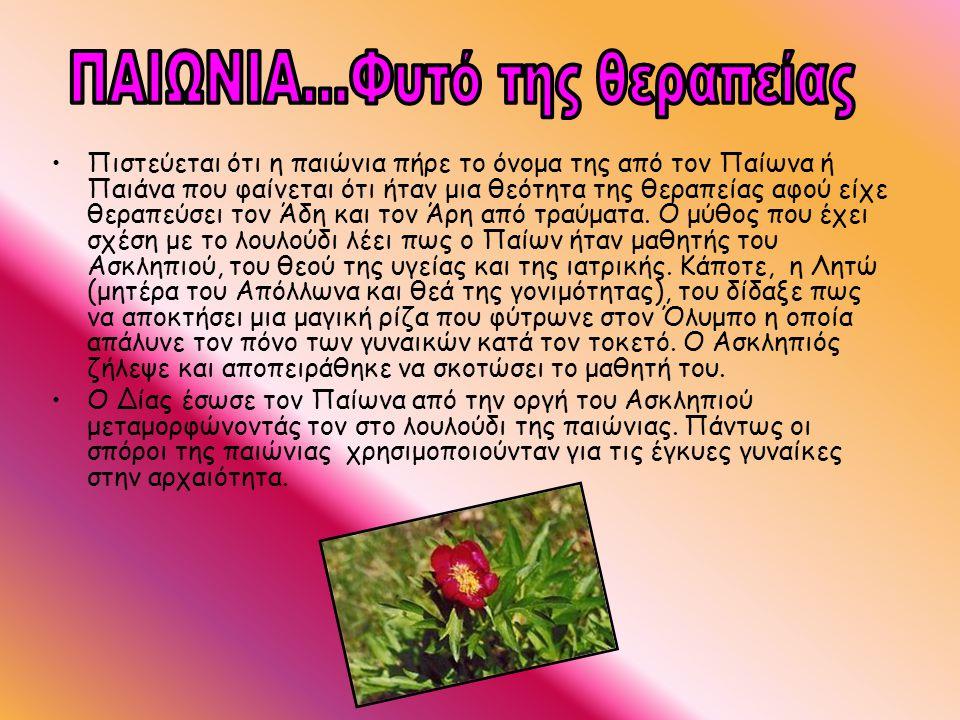 •Πιστεύεται ότι η παιώνια πήρε το όνομα της από τον Παίωνα ή Παιάνα που φαίνεται ότι ήταν μια θεότητα της θεραπείας αφού είχε θεραπεύσει τον Άδη και τ