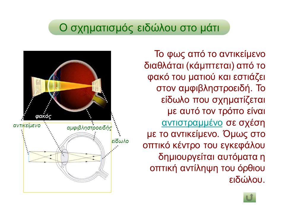 είδωλο φακός αμφιβληστροειδής Ο σχηματισμός ειδώλου στο μάτι αντικείμενο Το φως από το αντικείμενο διαθλάται (κάμπτεται) από το φακό του ματιού και εσ