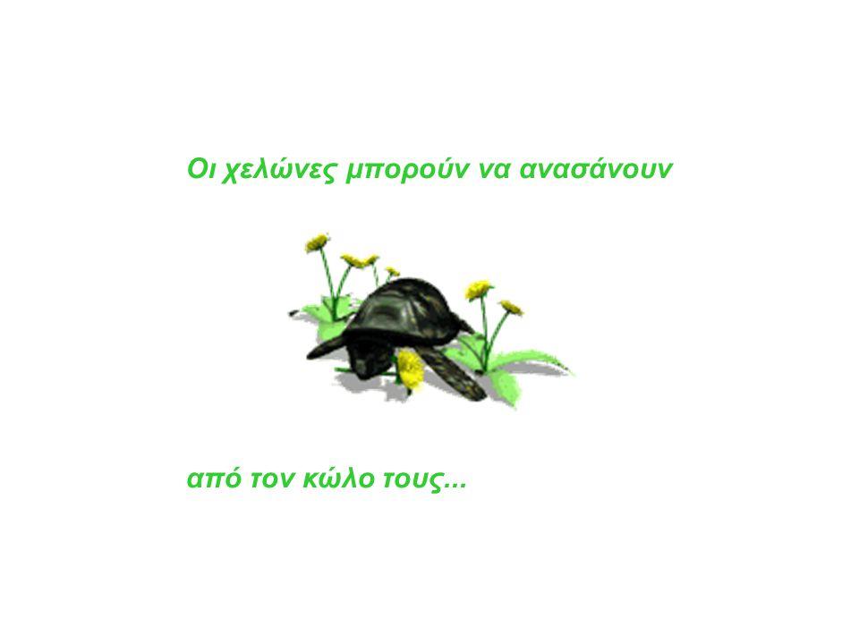 Οι χελώνες μπορούν να ανασάνουν από τον κώλο τους...