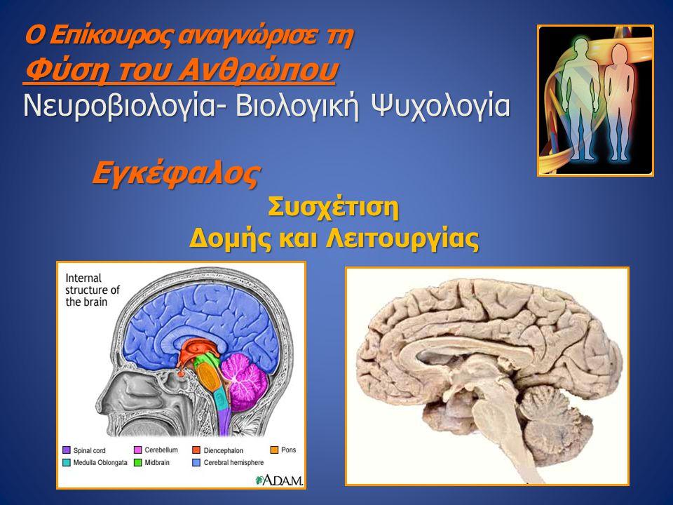 Ο Επίκουρος αναγνώρισε τη Φύση του Ανθρώπου Νευροβιολογία- Βιολογική Ψυχολογία ΕγκέφαλοςΣυσχέτιση Δομής και Λειτουργίας