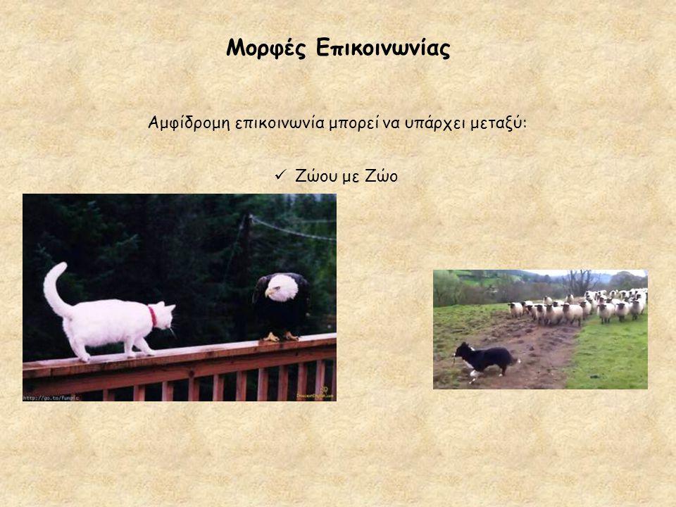 Μορφές Επικοινωνίας Αμφίδρομη επικοινωνία μπορεί να υπάρχει μεταξύ:  Ζώου με Ζώο