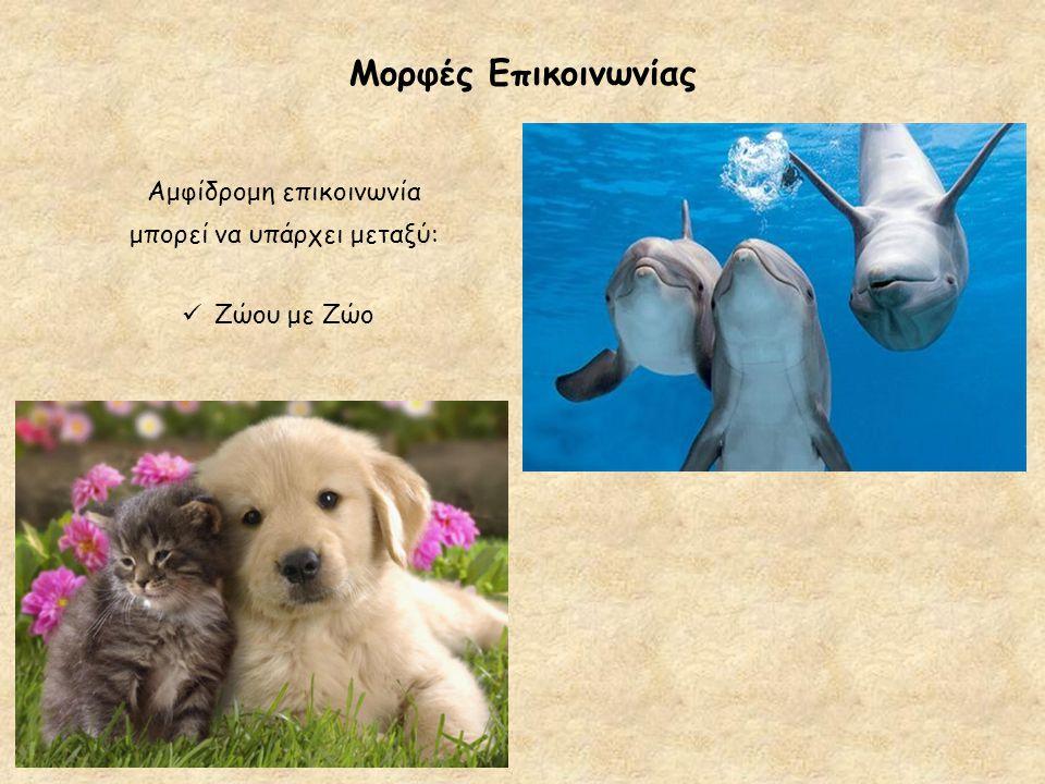 Μορφές Επικοινωνίας  Ζώου με Ζώο Αμφίδρομη επικοινωνία μπορεί να υπάρχει μεταξύ:
