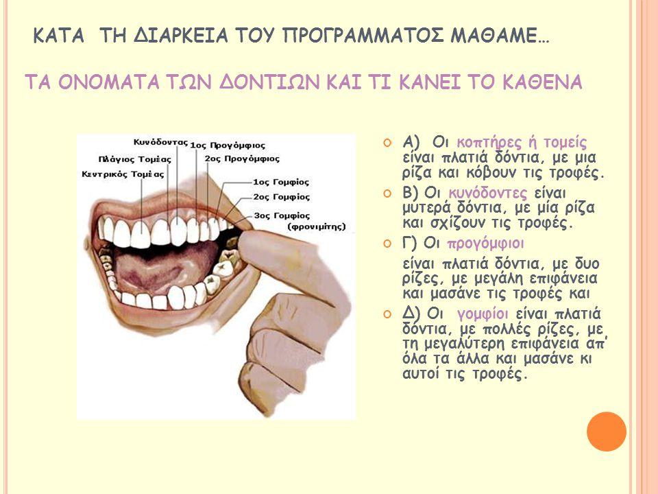 ΤΑ ΟΝΟΜΑΤΑ ΤΩΝ ΔΟΝΤΙΩΝ ΚΑΙ ΤΙ ΚΑΝΕΙ ΤΟ ΚΑΘΕΝΑ Α) Οι κοπτήρες ή τομείς είναι πλατιά δόντια, με μια ρίζα και κόβουν τις τροφές. Β) Οι κυνόδοντες είναι μ