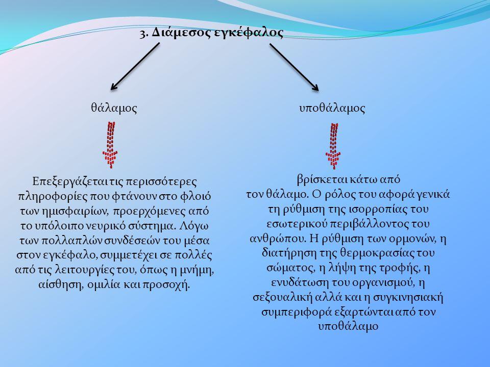 3. Διάμεσος εγκέφαλος θάλαμοςυποθάλαμος Επεξεργάζεται τις περισσότερες πληροφορίες που φτάνουν στο φλοιό των ημισφαιρίων, προερχόμενες από το υπόλοιπο