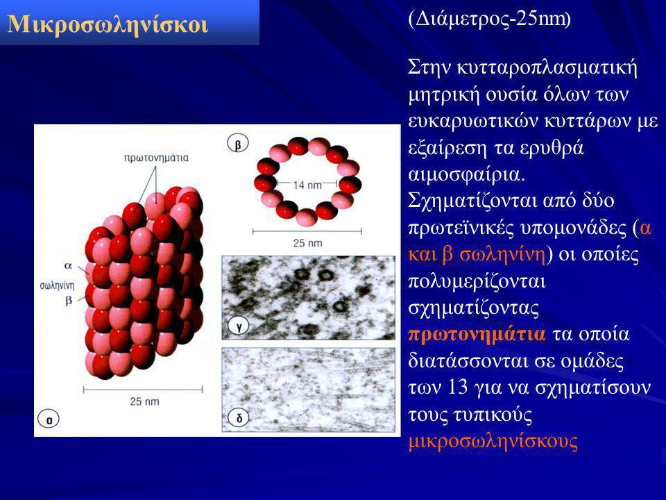 Μικροσωληνίσκοι (Διάμετρος-25nm ) Στην κυτταροπλασματική μητρική ουσία όλων των ευκαρυωτικών κυττάρων με εξαίρεση τα ερυθρά αιμοσφαίρια. Σχηματίζονται
