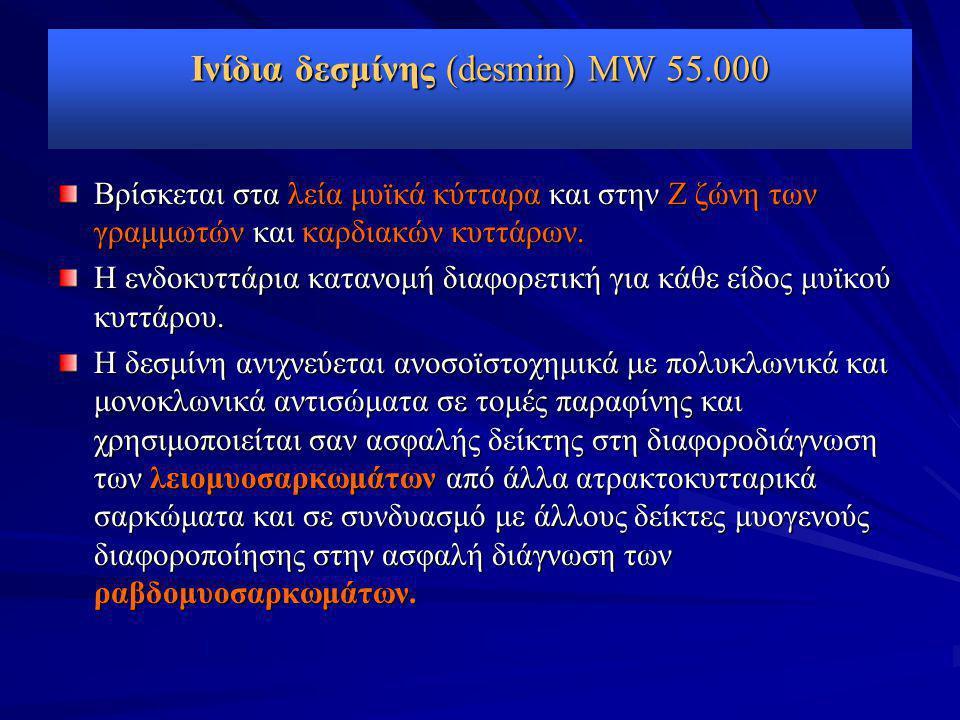 Ινίδια δεσμίνης (desmin) MW 55.000 Βρίσκεται στα λεία μυϊκά κύτταρα και στην Ζ ζώνη των γραμμωτών και καρδιακών κυττάρων. Η ενδοκυττάρια κατανομή διαφ