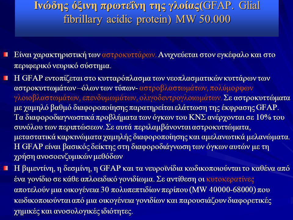 Ινώδης όξινη πρωτεΐνη της γλοίας(GFAP. Glial fibrillary acidic protein) MW 50.000 Είναι χαρακτηριστική των αστροκυττάρων. Ανιχνεύεται στον εγκέφαλο κα