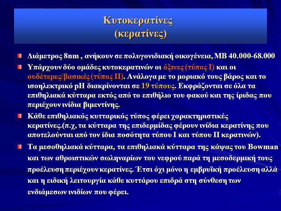 Κυτοκερατίνες (κερατίνες) Διάμετρος 8nm, ανήκουν σε πολυγονιδιακή οικογένεια, ΜΒ 40.000-68.000 Υπάρχουν δύο ομάδες κυτοκερατινών οι όξινες (τύπος I) κ