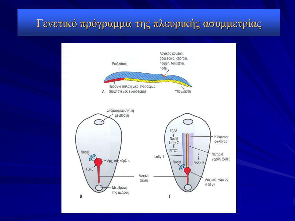 Γενετικό πρόγραμμα της πλευρικής ασυμμετρίας