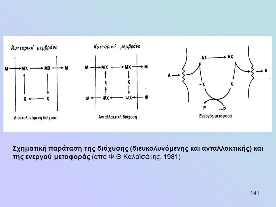 141 Σχηματική παράταση της διάχυσης (διευκολυνόμενης και ανταλλακτικής) και της ενεργού μεταφοράς (από Φ.Θ Καλαϊσάκης, 1981)