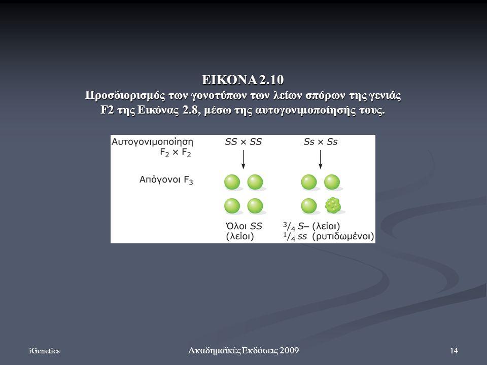 iGenetics 14 Ακαδημαϊκές Εκδόσεις 2009 ΕΙΚΟΝΑ 2.10 Προσδιορισμός των γονοτύπων των λείων σπόρων της γενιάς F2 της Εικόνας 2.8, μέσω της αυτογονιμοποίη